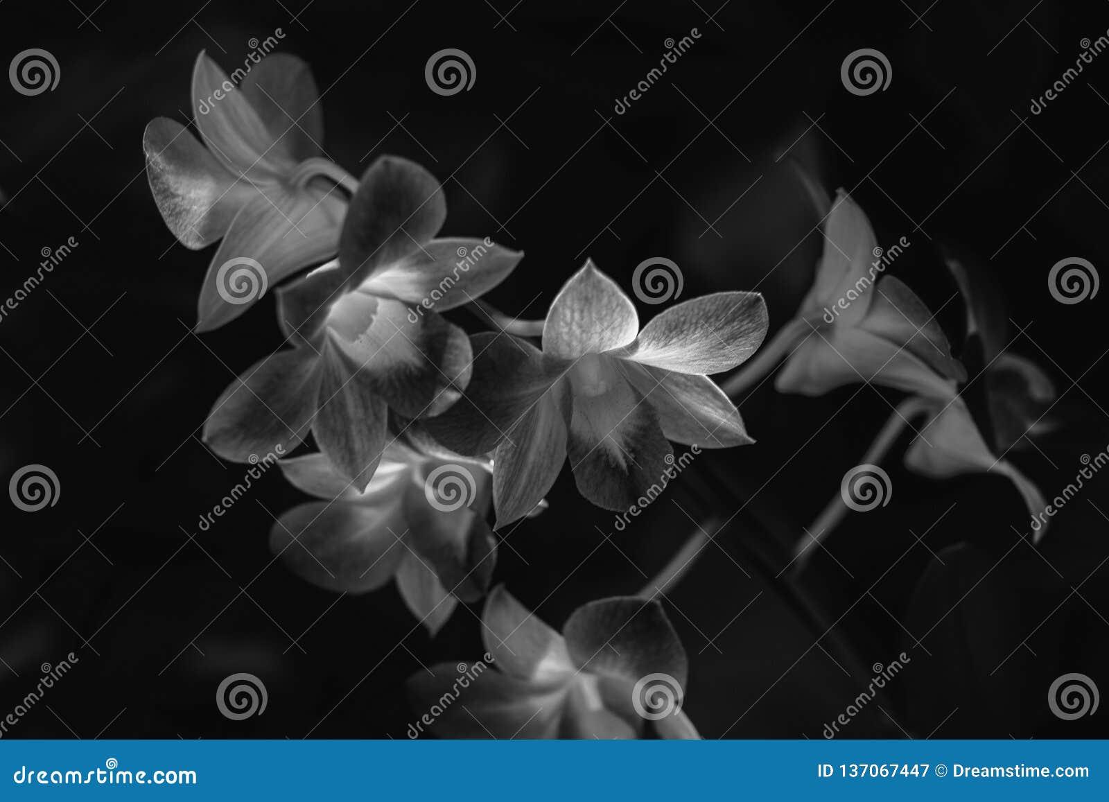 Un fiore che fioriture in mezzo delle ombre: un individuazione malinconica
