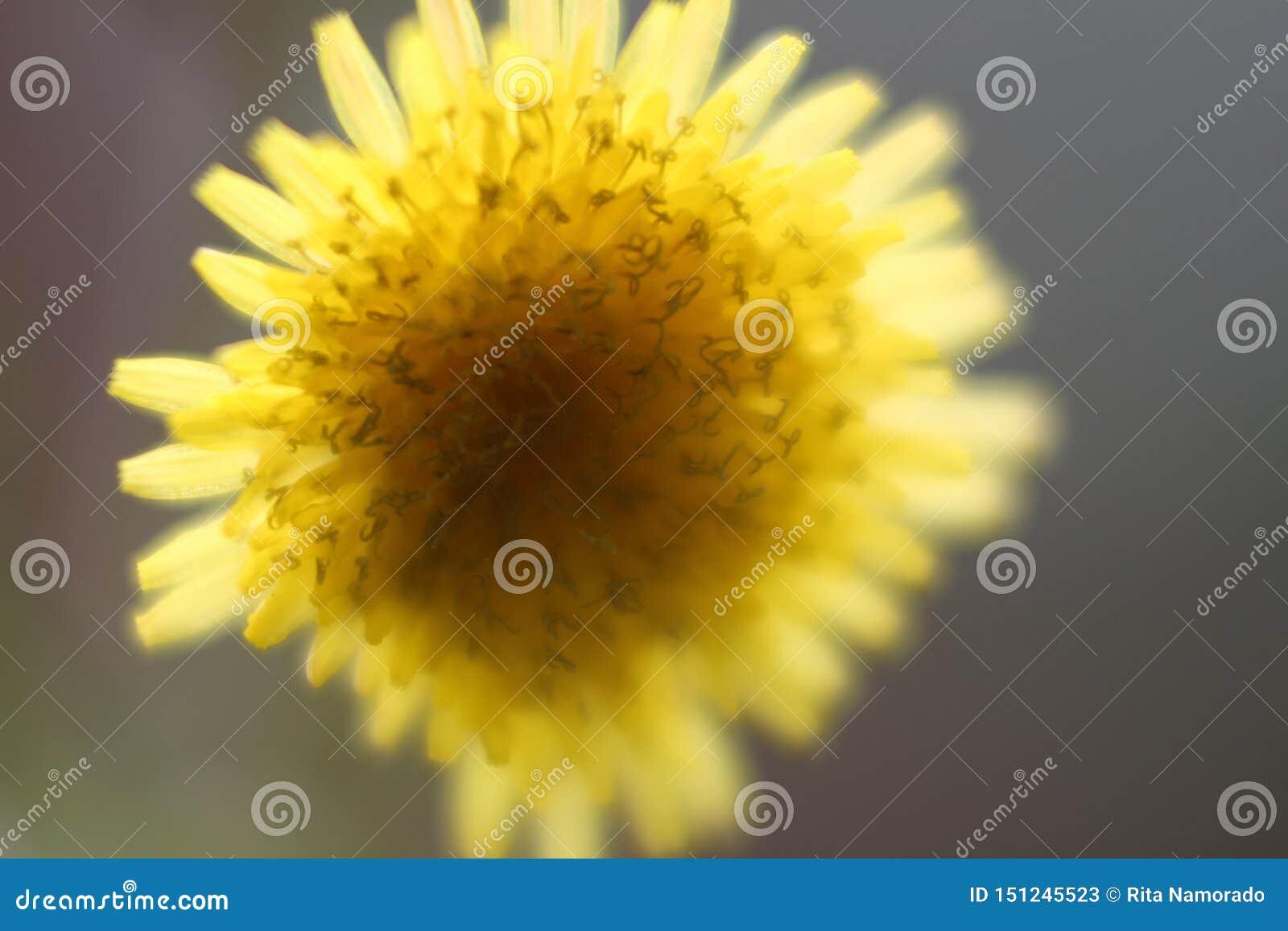 Un fiore giallo capovolto