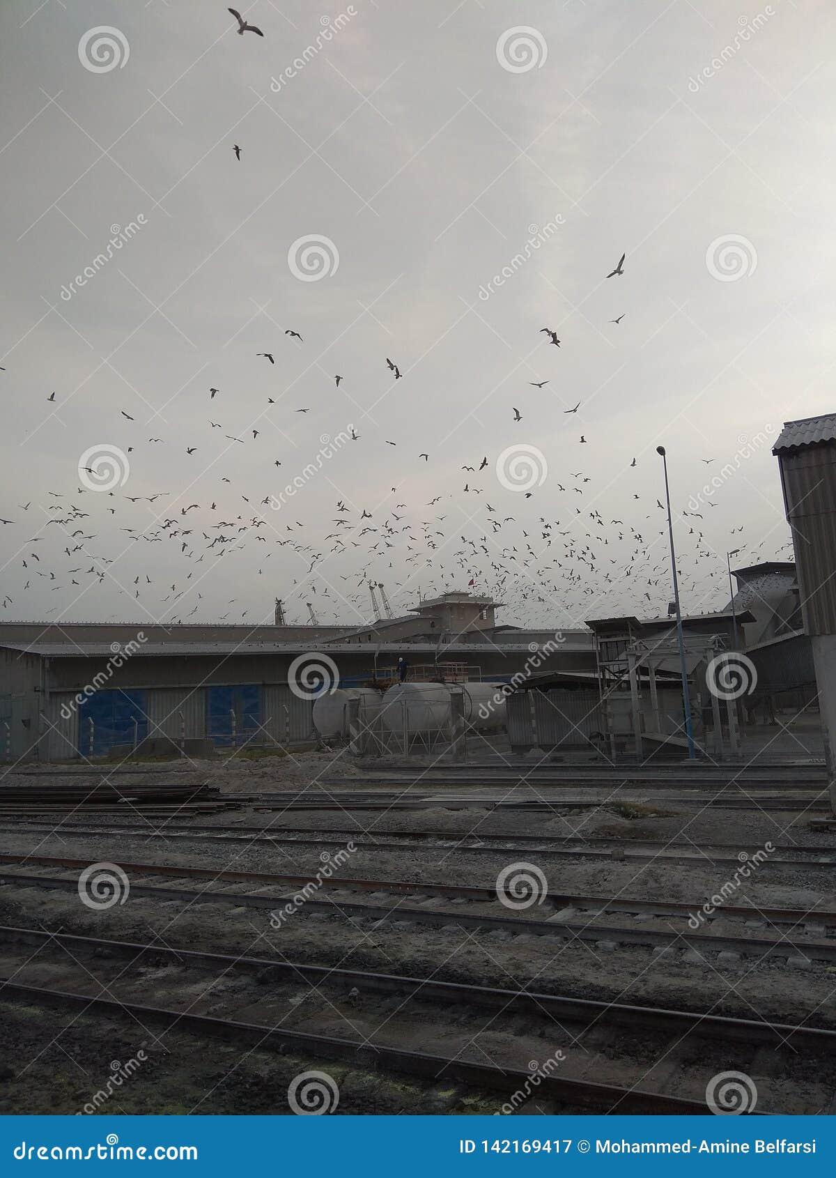 Un flack de los pájaros de vuelo