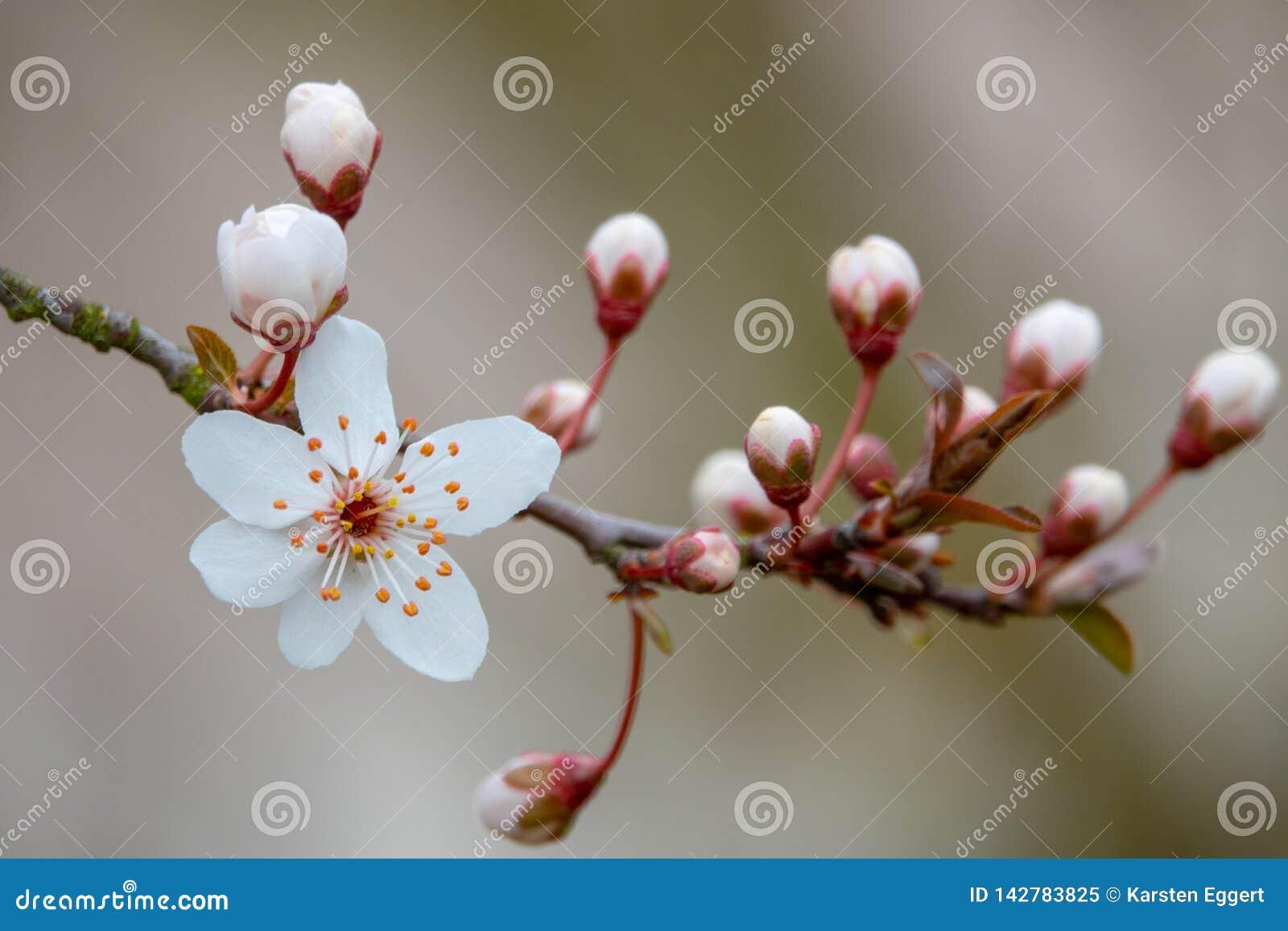 Un flor blanco en primavera