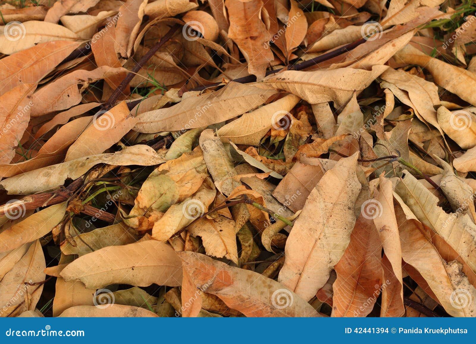 Un fondo de muere las hojas marrones