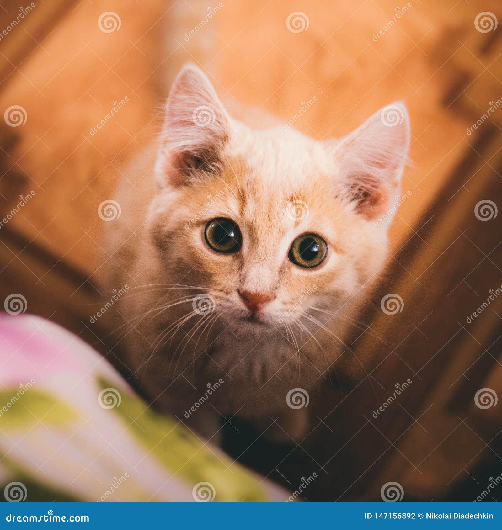 Un gatito mira la cámara