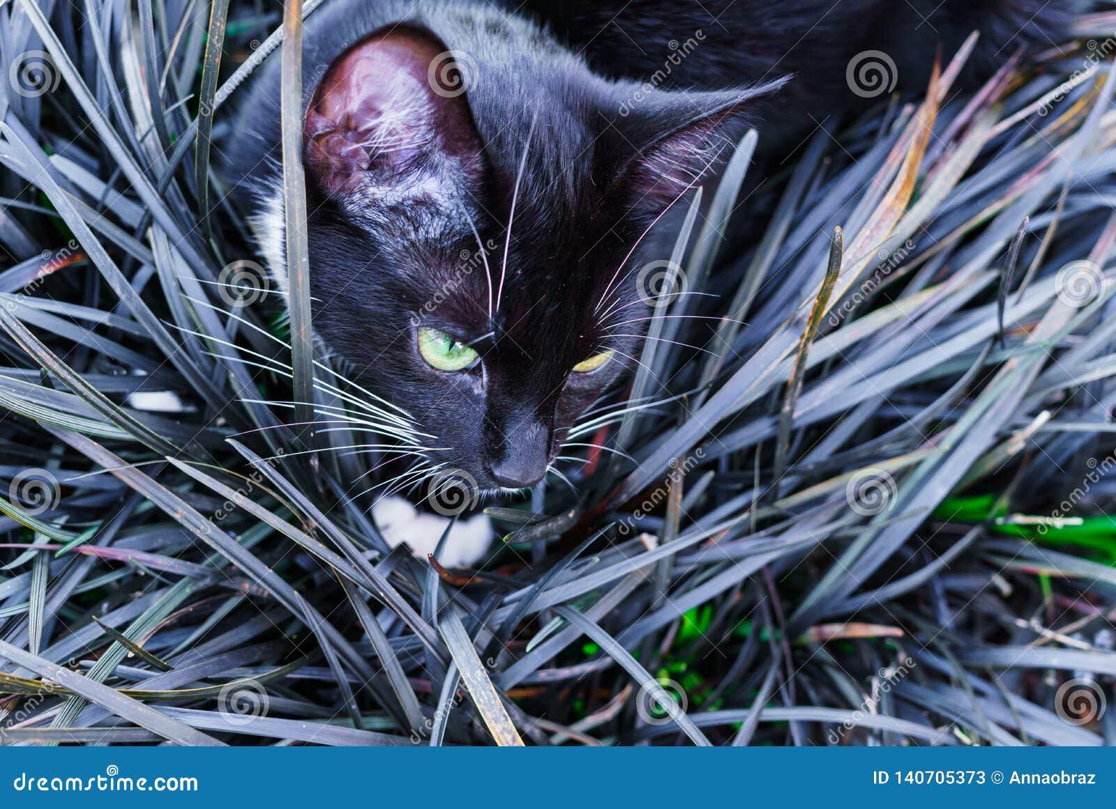 Un gatito negro hermoso que oculta en un macizo de flores decorativo en el jardín