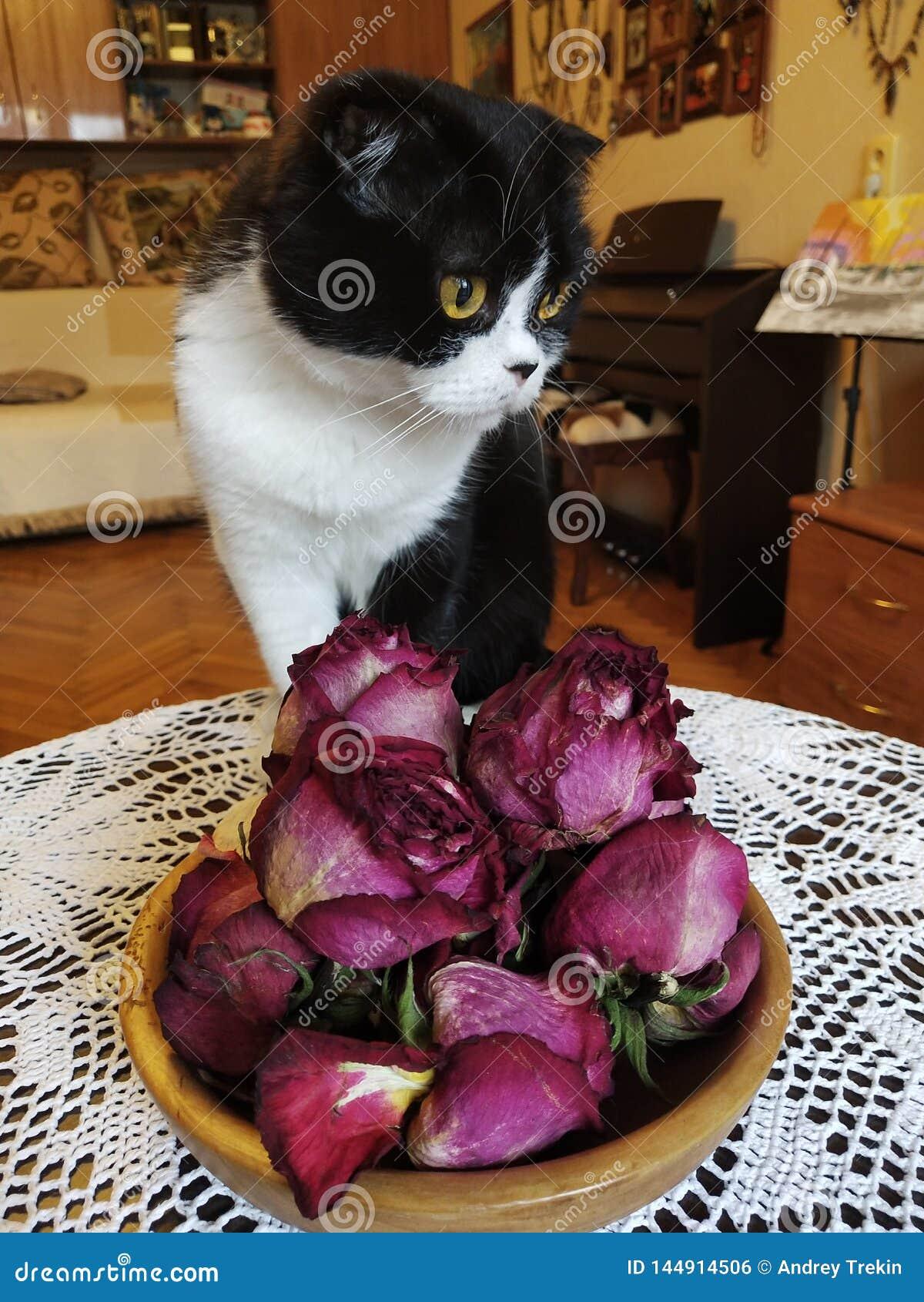 Un gato en la tabla