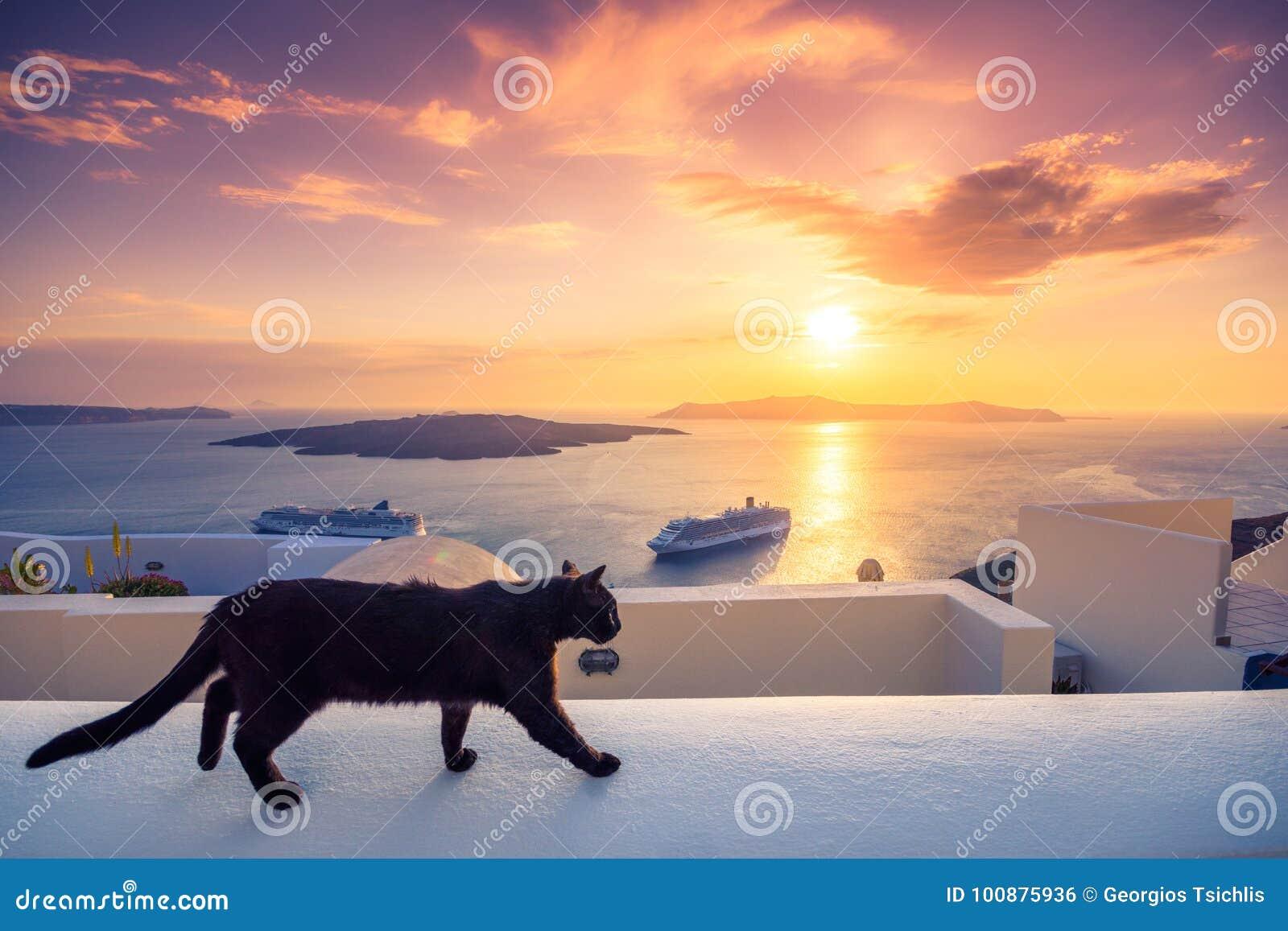 Un gato negro en una repisa en la puesta del sol en la ciudad de Fira, con la vista de la caldera, del volcán y de los barcos de