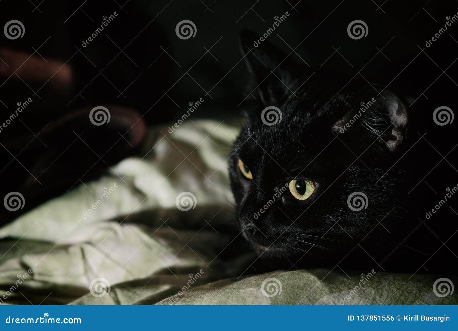 Un gato negro que se acuesta en su cama