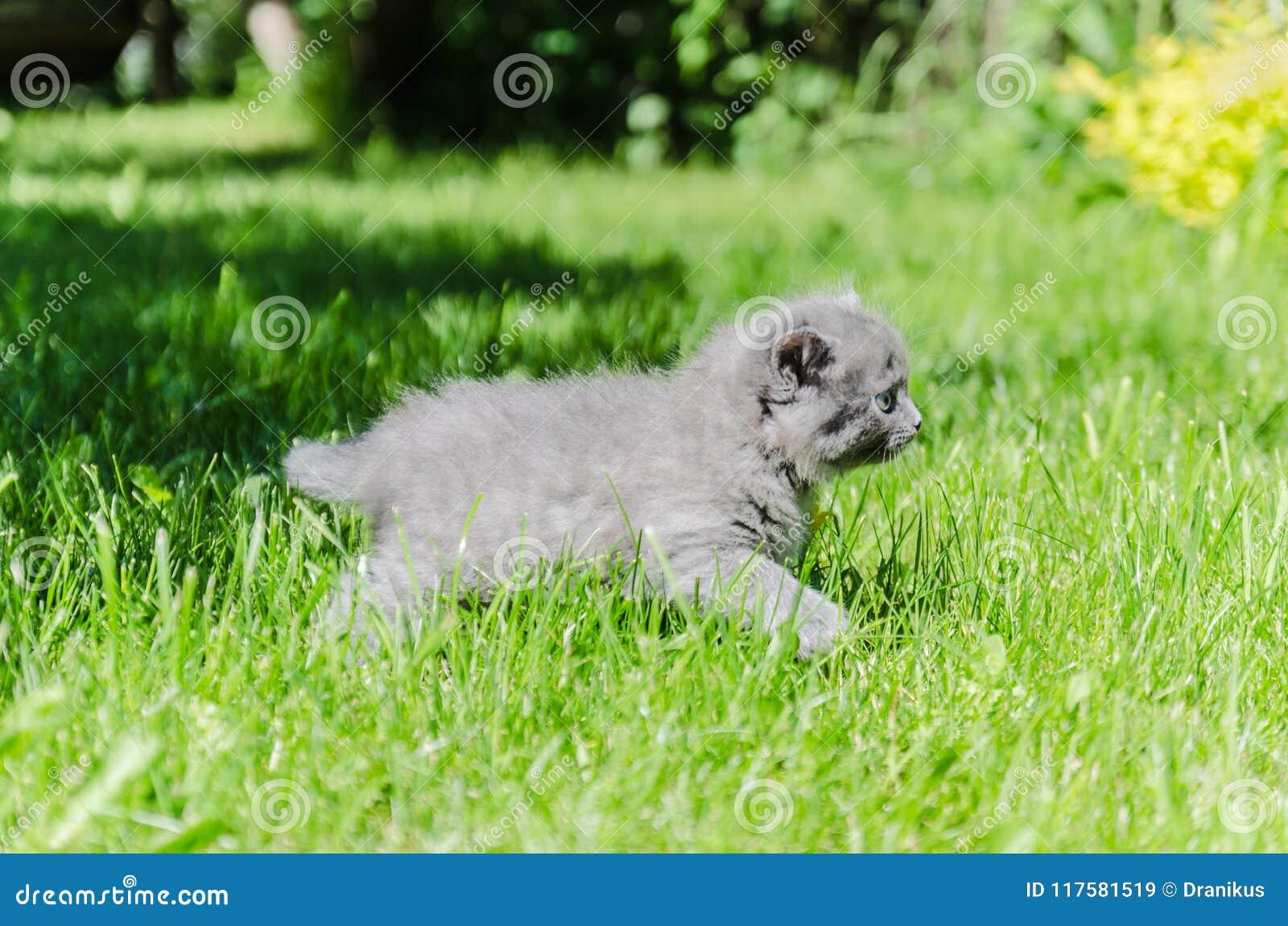 Un gattino sveglio impara intraprendere le prime azione indipendenti