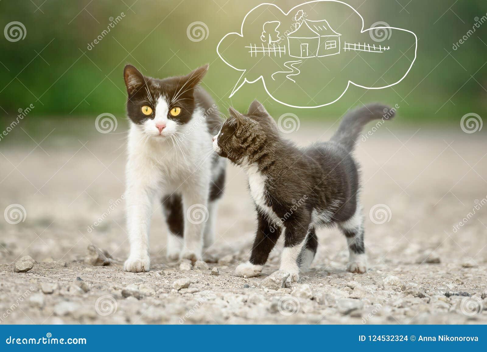 Un gatto con un gattino che sogna dell individuazione della casa