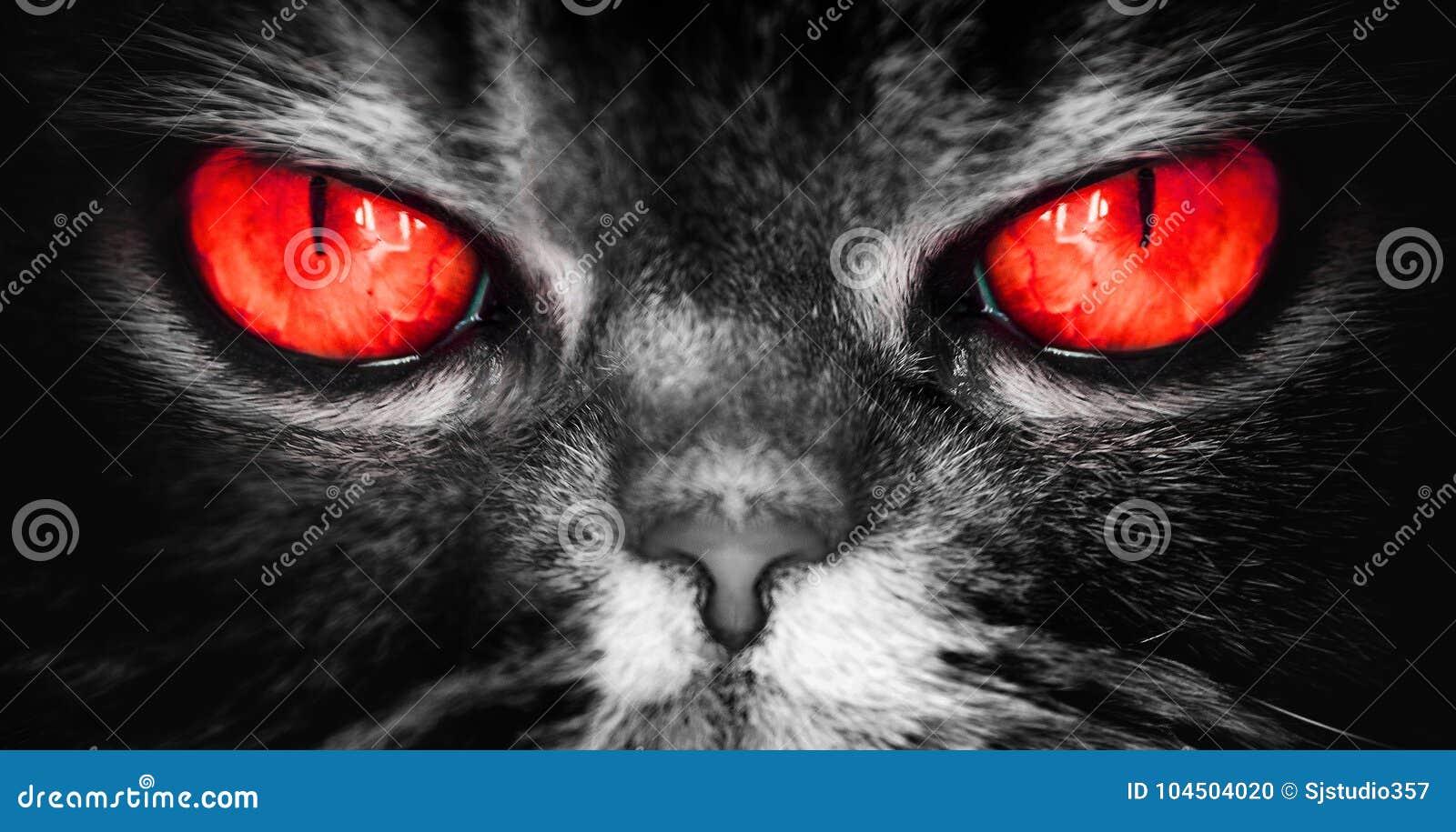Un gatto con il diavolo rosso osserva, un fronte terribile diabolico da un incubo, sguardi direttamente nell anima, macchina foto