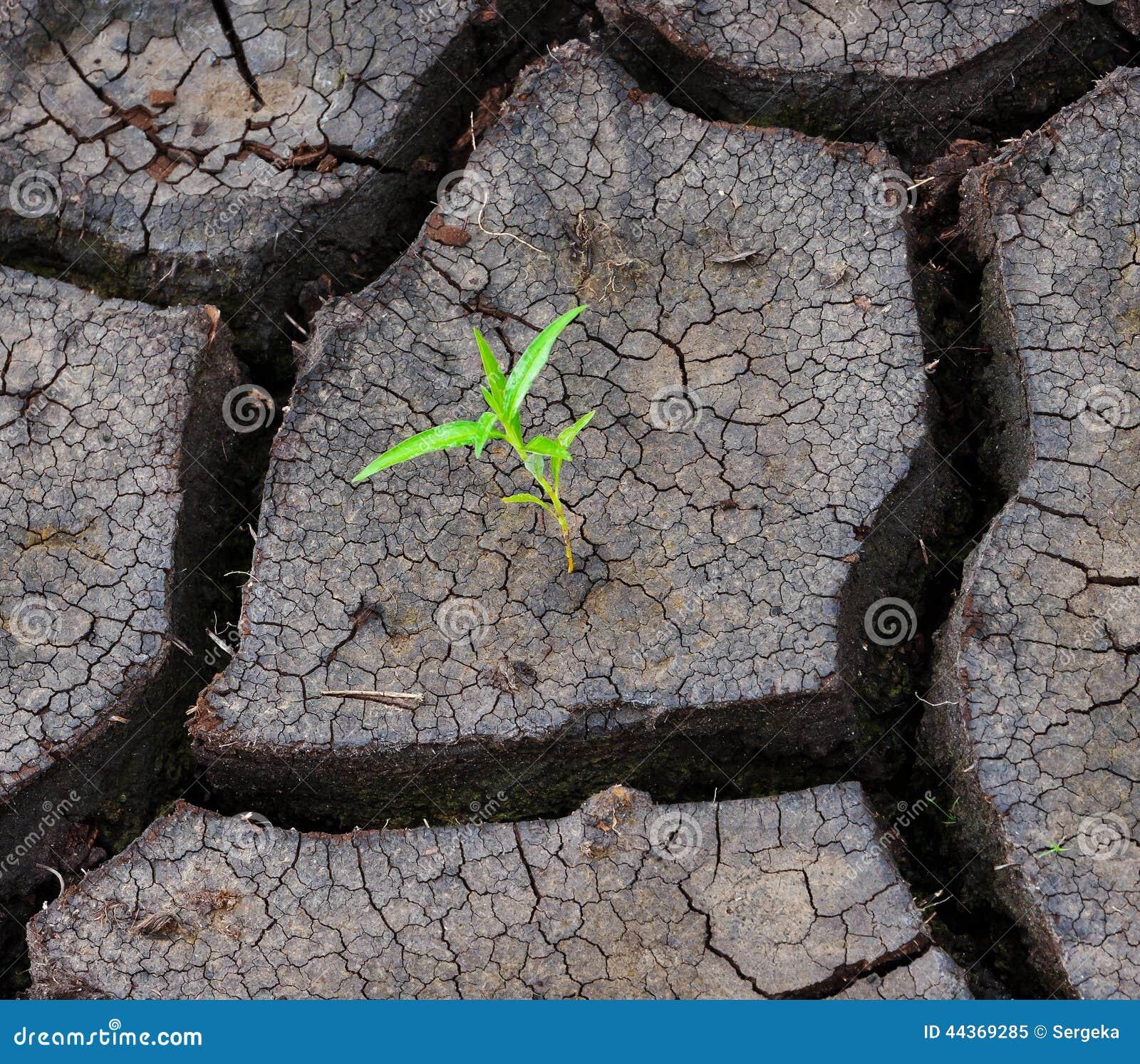 Un germoglio verde è in terra asciutta