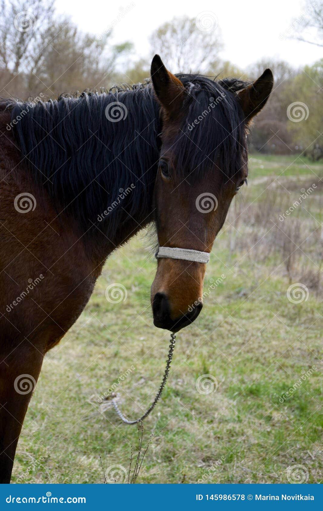 Un giovane cavallo con una bella criniera nera