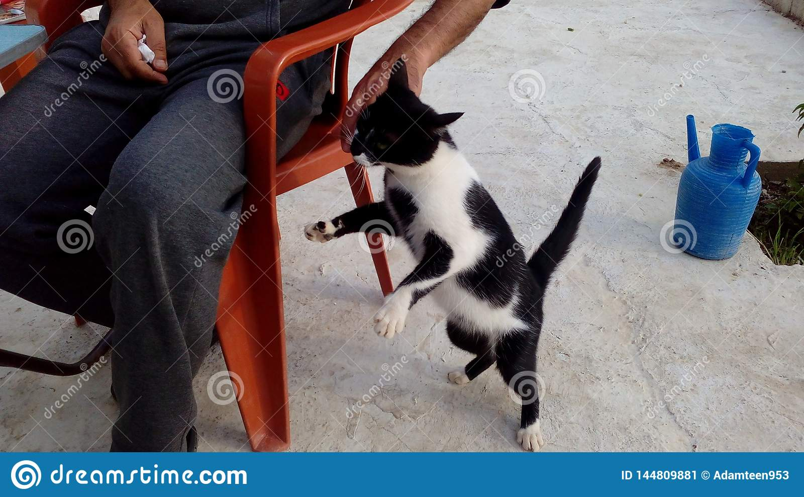 Un giovane, salto sano e di medie dimensioni del gatto