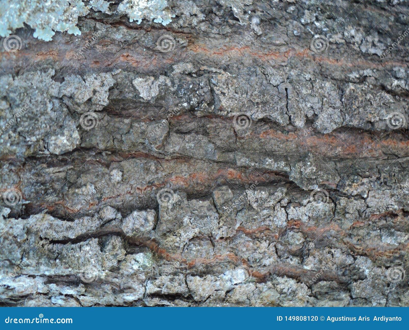 Un grand brun de texture d écorce