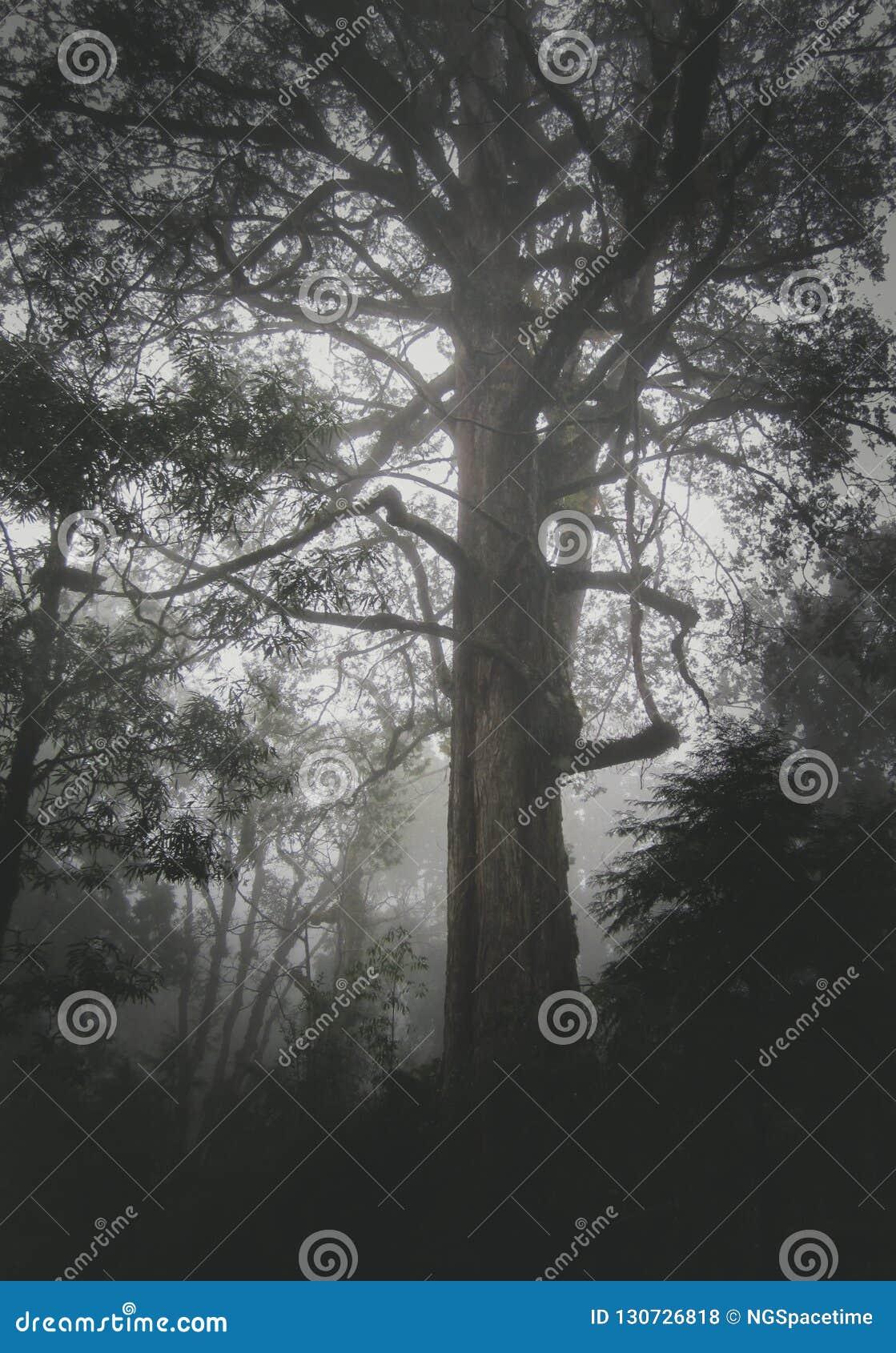 Un grande albero di cedro in montagna di Ali