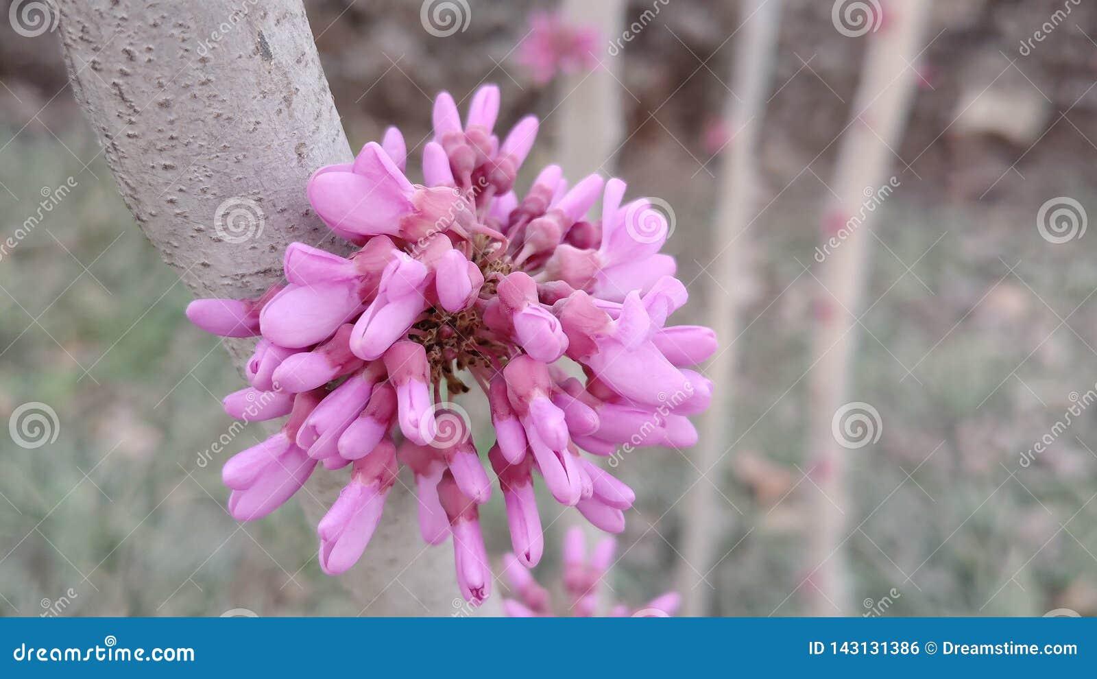Un groupe de fleurs fuchsia comme une trompette