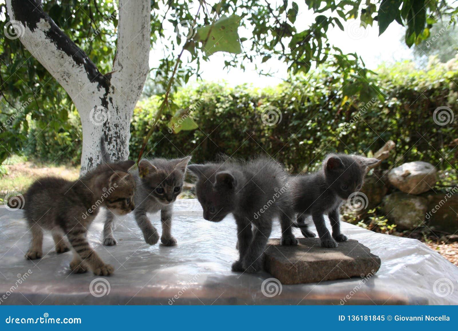 Un groupe de quatre petits chatons explorent soigneusement le monde autour de eux avec leurs yeux
