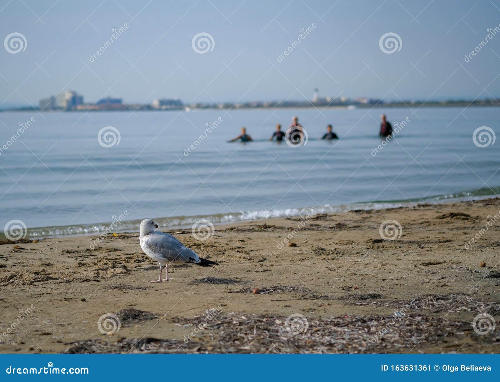 Un Gruppo Di Anziani O Anziani Camminano Lungo La Spiaggia ...