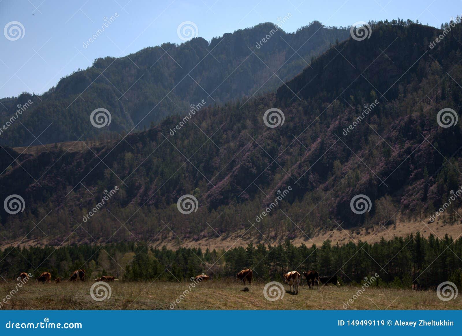Un gruppo di cavalli pasce in una valle fertile circondata dalle montagne