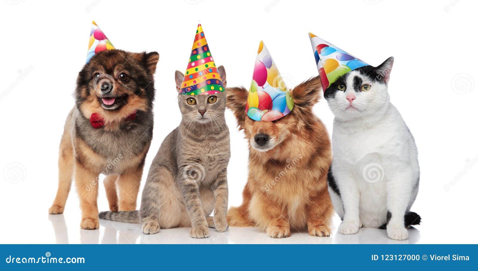 Un Gruppo Di Quattro Gatti E Cani Divertenti Con I Cappelli Di