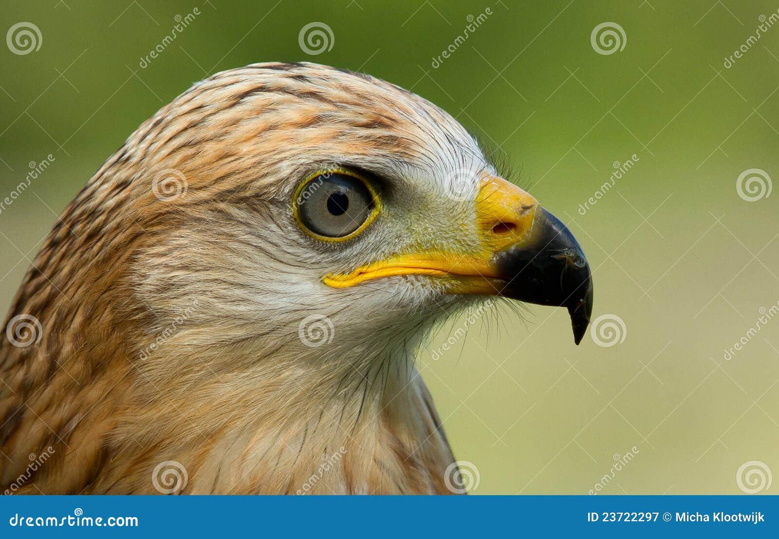 Un halcón zanquilargo