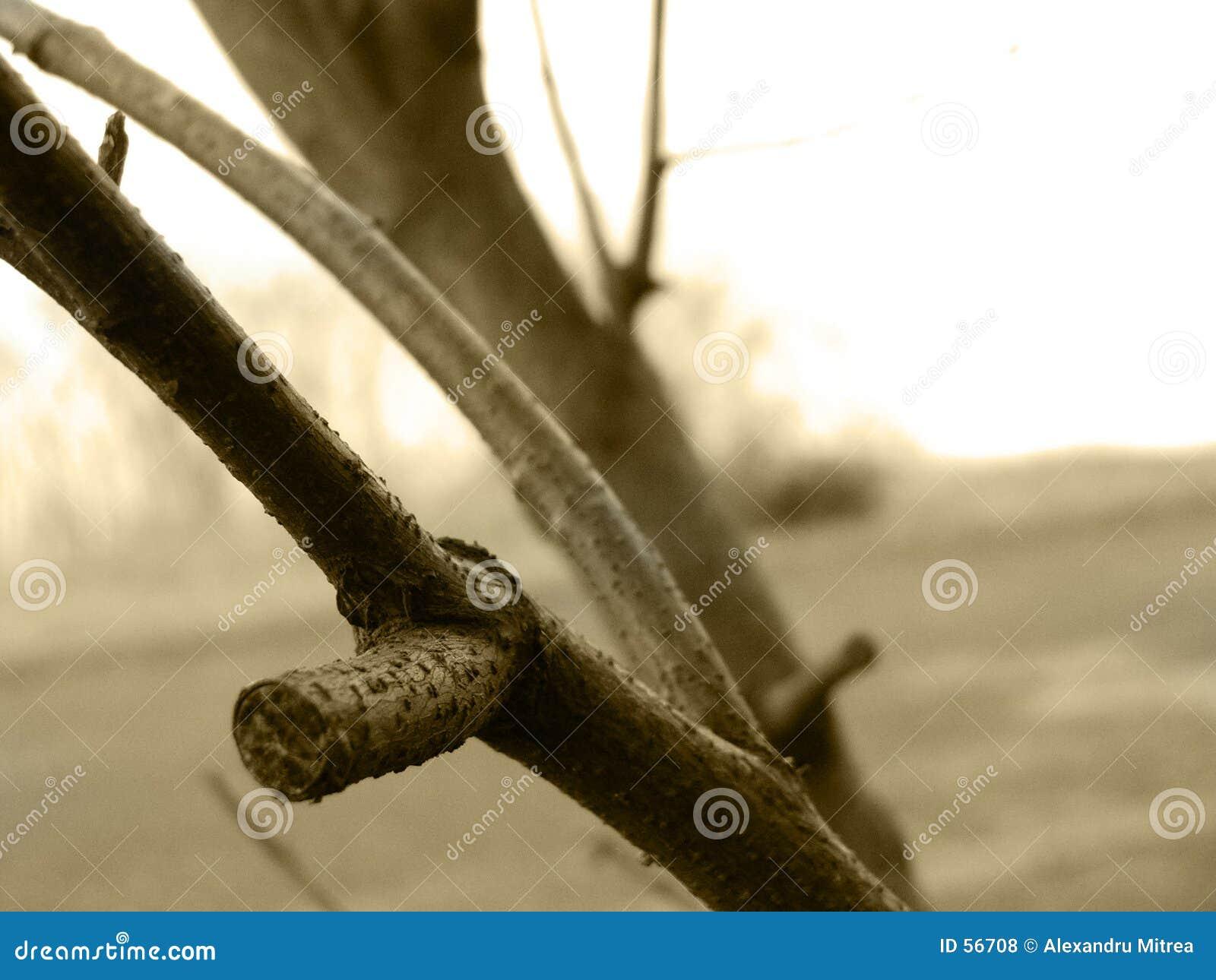 Download Un hiver manquant photo stock. Image du forêt, arbre, nature - 56708