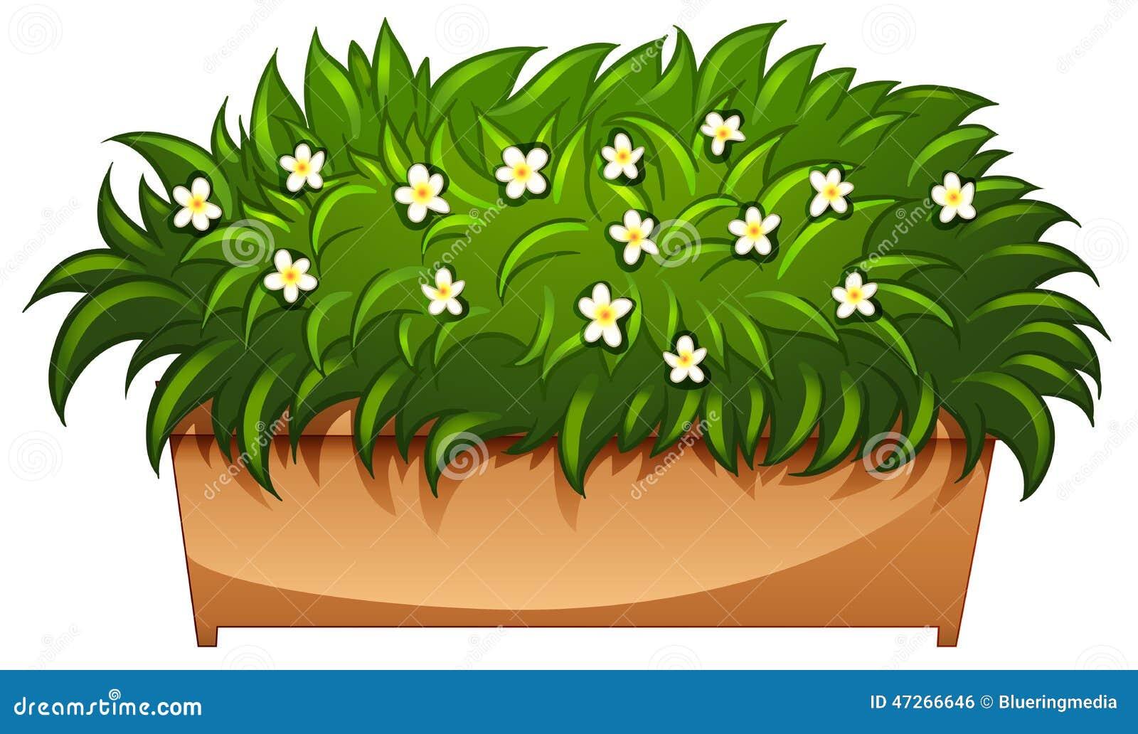 Un houseplant floreciente