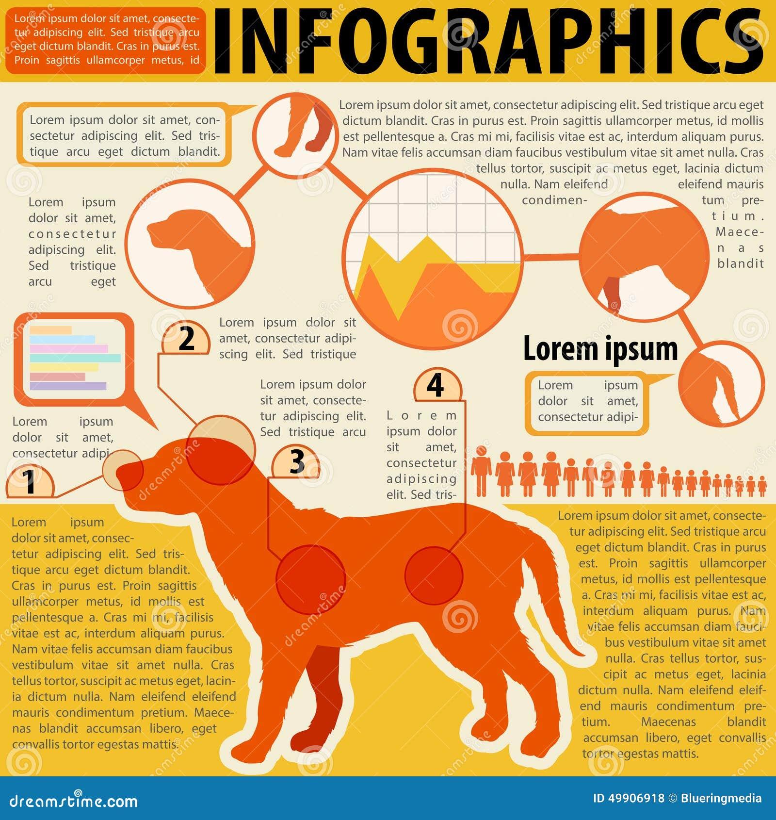 Un infographics de un perro