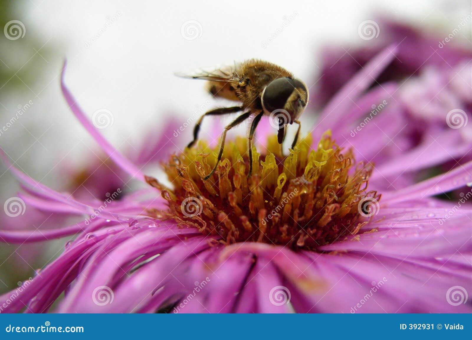 Un insecte sur une fleur