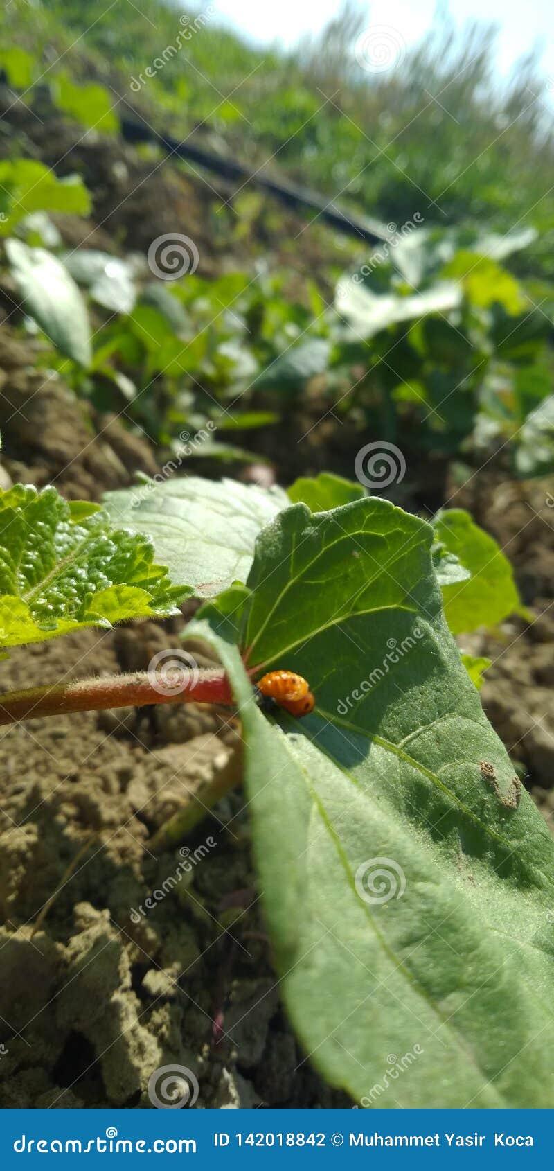 Un insecto en una hoja