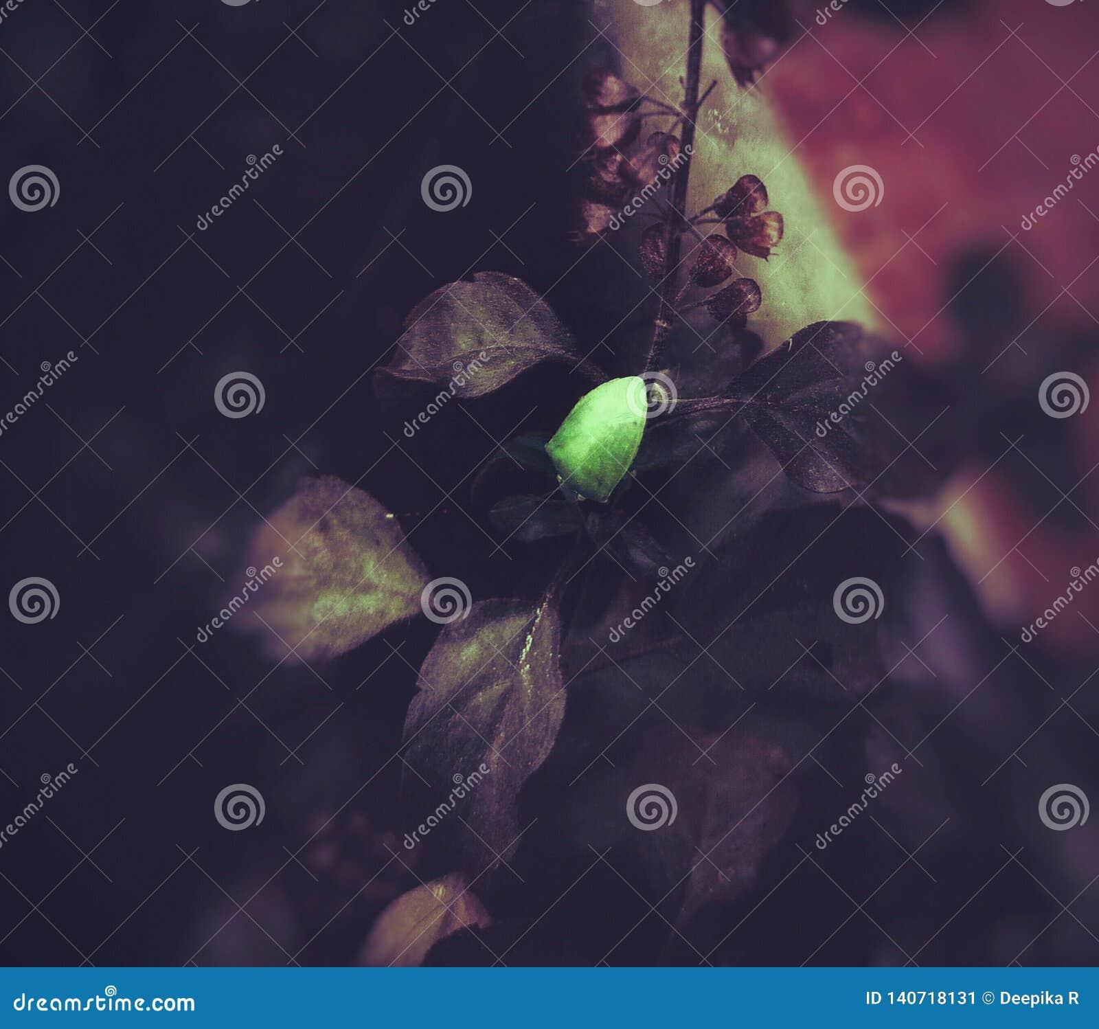 Un insecto verde en una planta de la albahaca