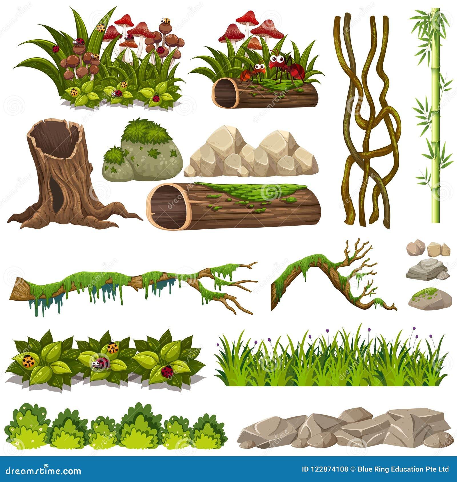 Un insieme degli elementi della natura