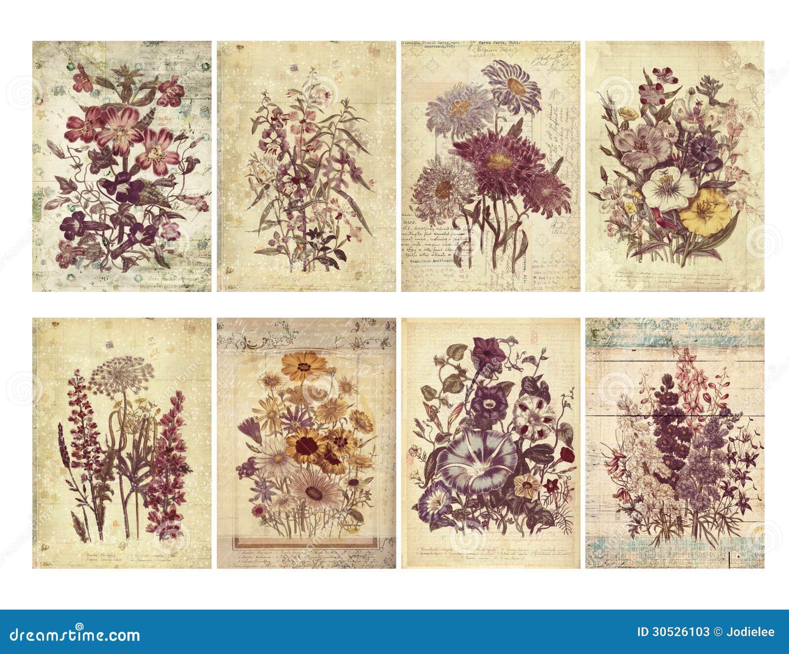 Un insieme di otto carte floreali d annata misere con gli strati ed il testo strutturati.