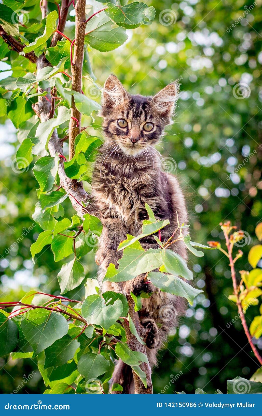 Un jeune, barré, agité chat se repose sur un branch_ d arbre