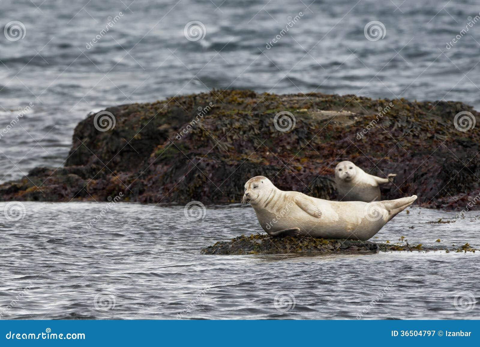 Un joint tout en détendant sur une roche