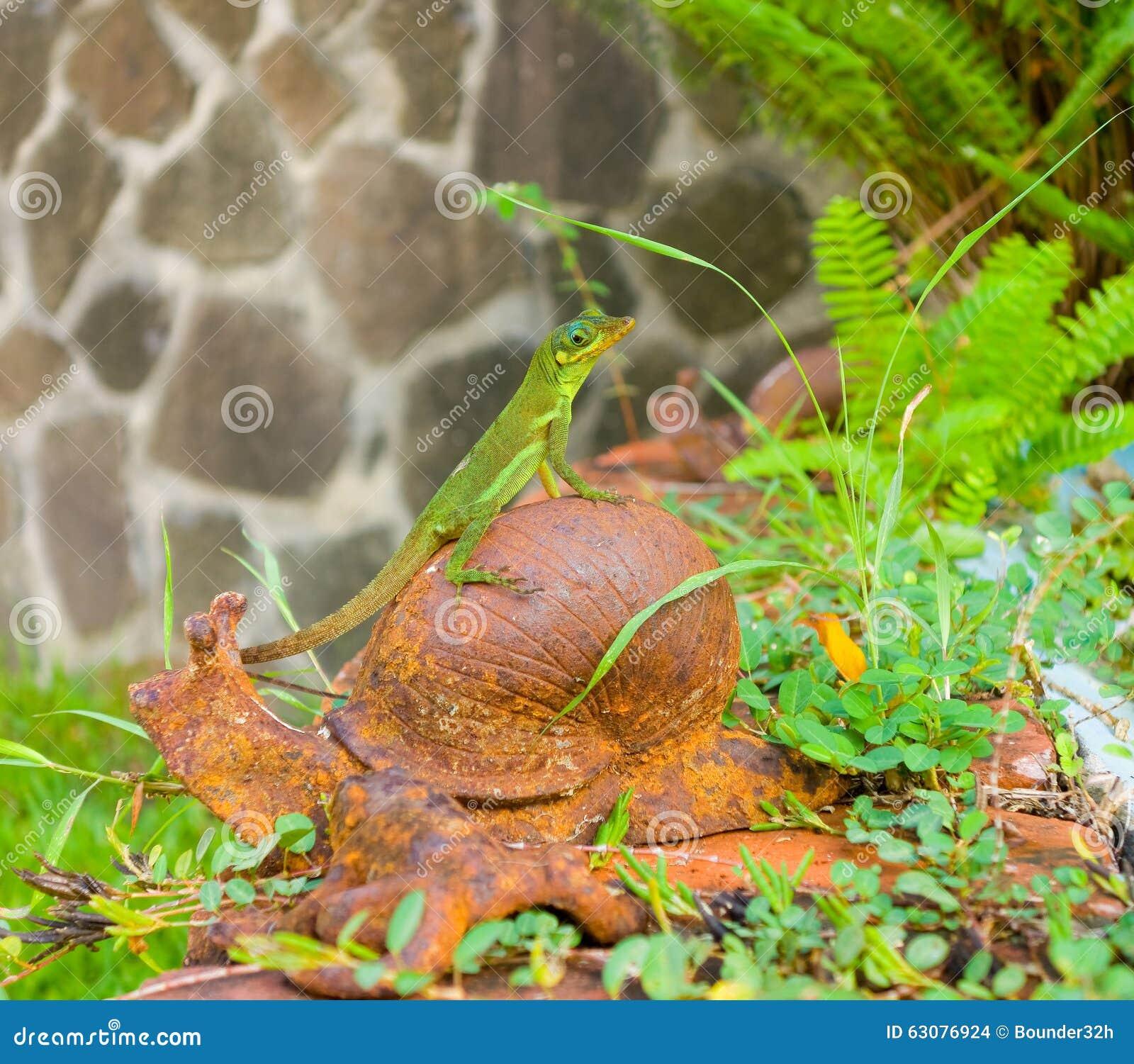 Download Un Lézard Posant Sur Un Ornement De Jardin Photo stock - Image du verdure, pierre: 63076924