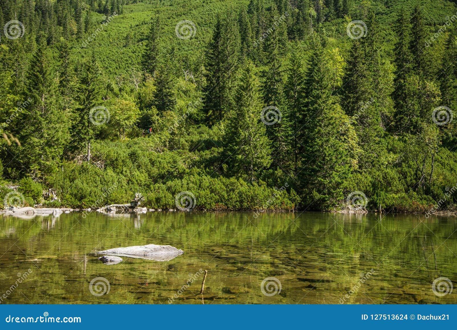 Un lago hermoso, limpio en el valle de la montaña en la calma, día soleado Paisaje de la montaña con agua en verano