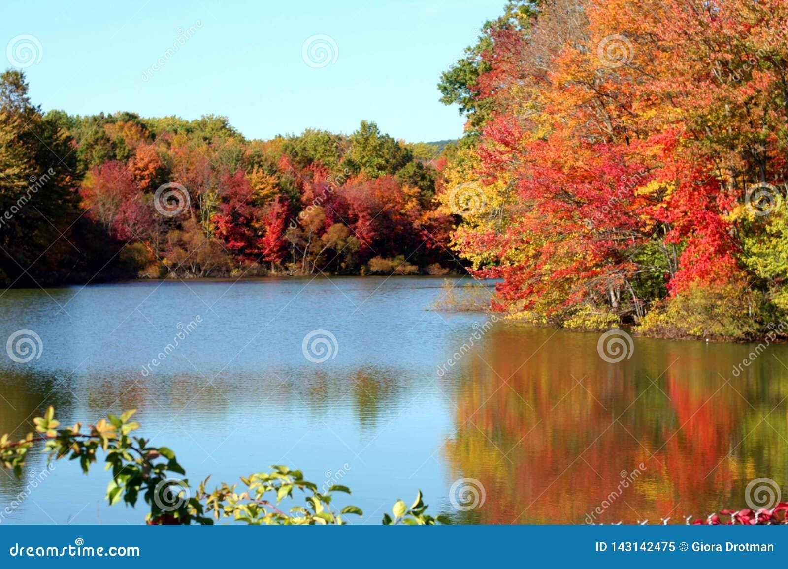 Un lago nella caduta