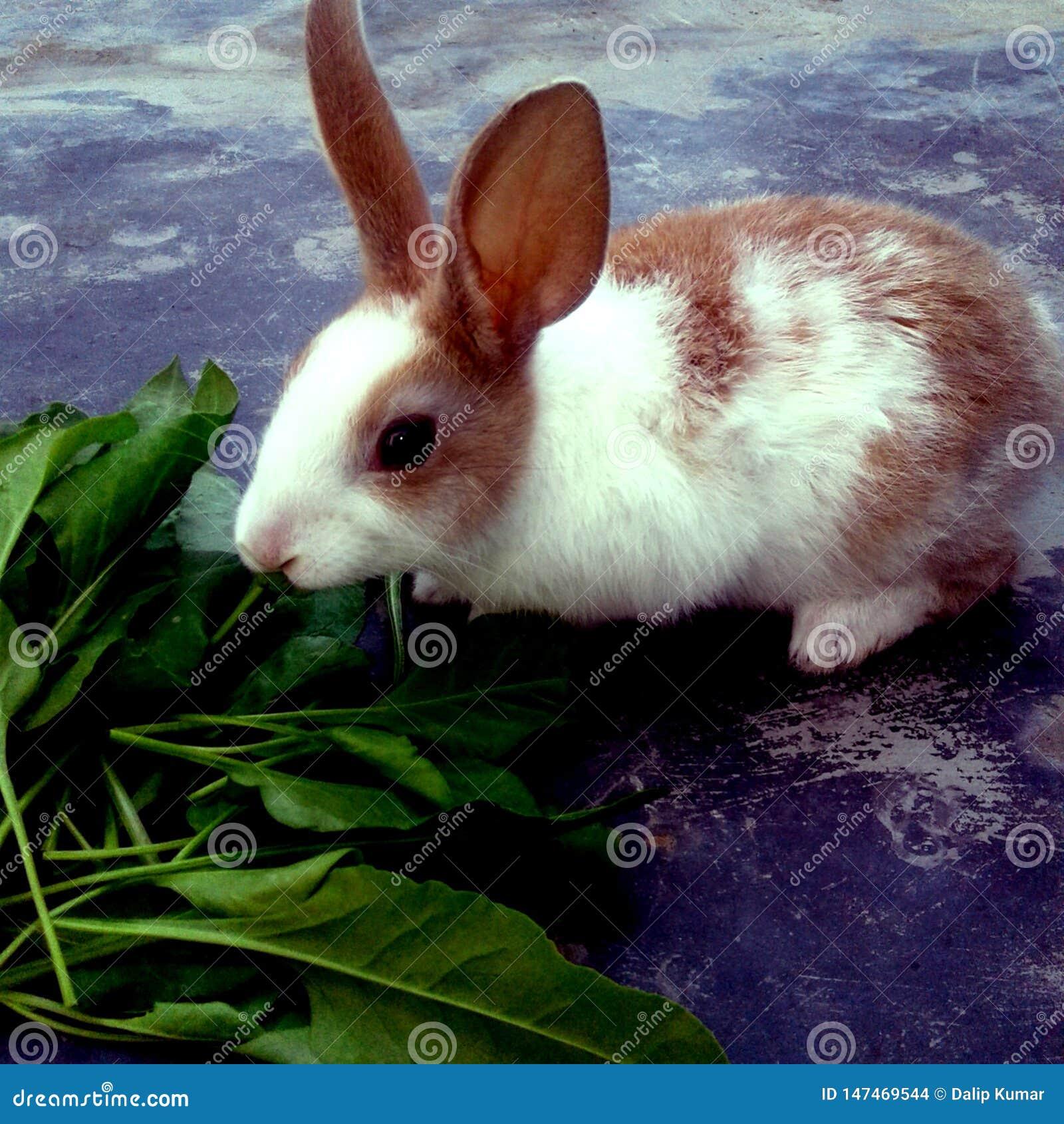 Un lapin blanc et brun mangeant l herbe