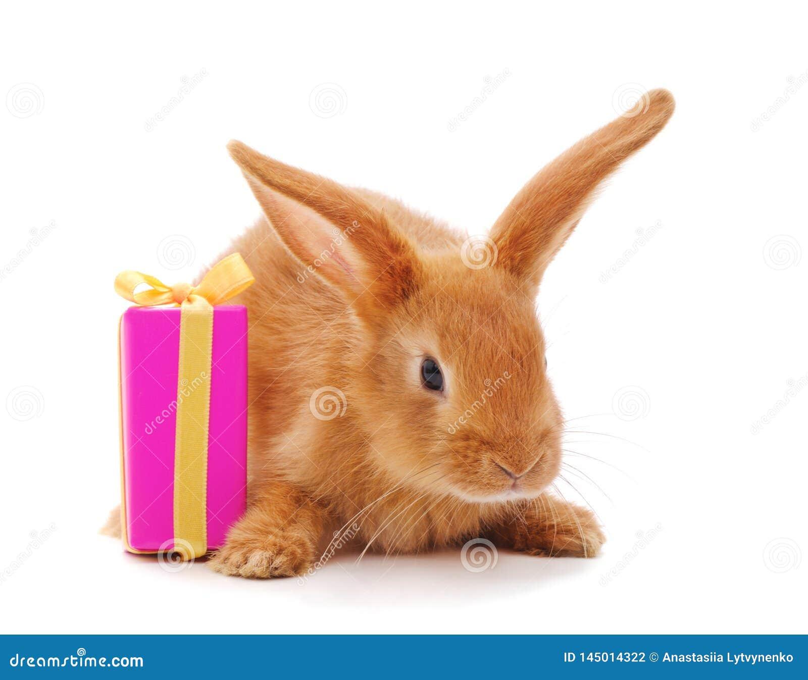 Un lapin brun avec le cadeau