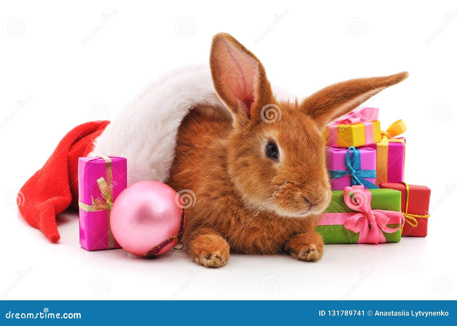 Un lapin brun dans un chapeau de Noël avec des cadeaux