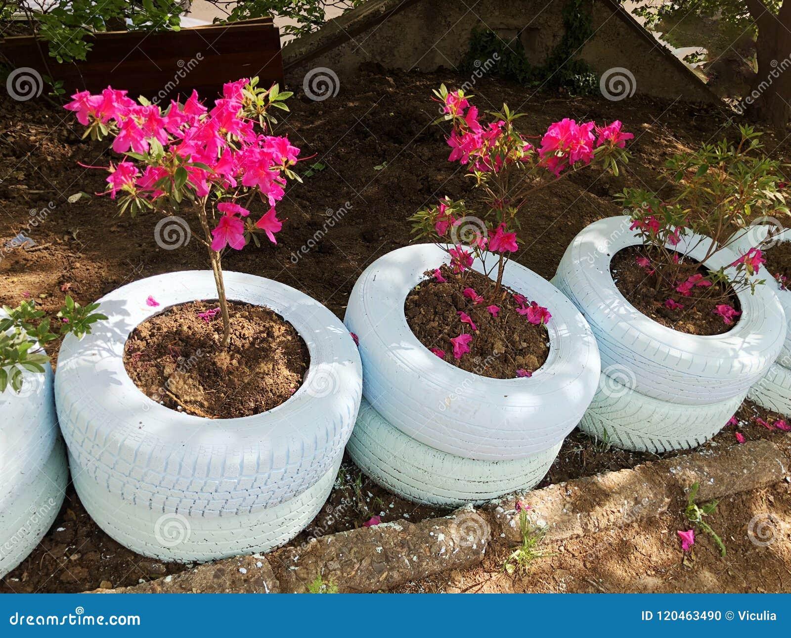Pot De Fleur Avec Des Pneus un lit de fleur rouge hors de vieux pneus de voiture blancs