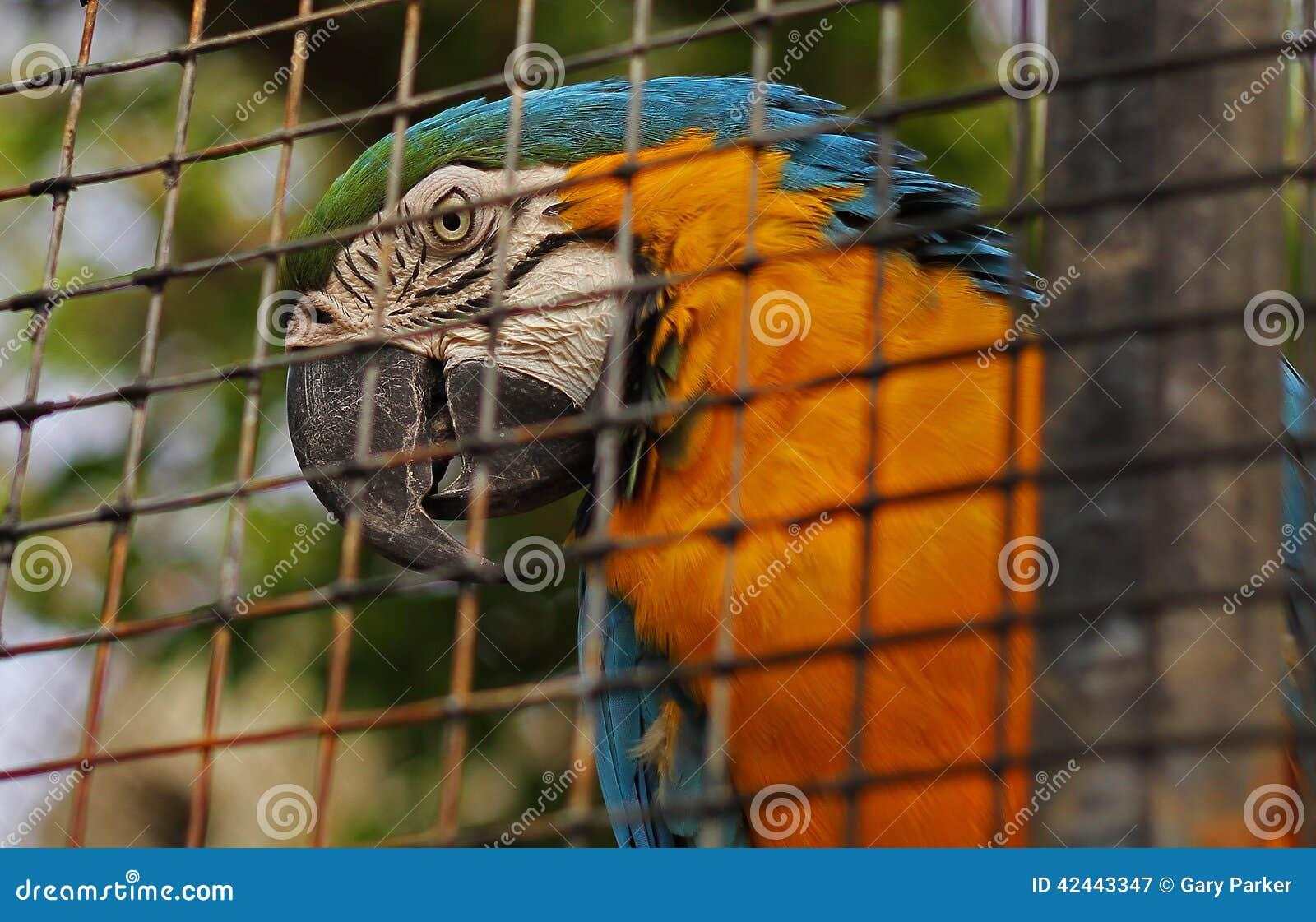 Un loro en una jaula