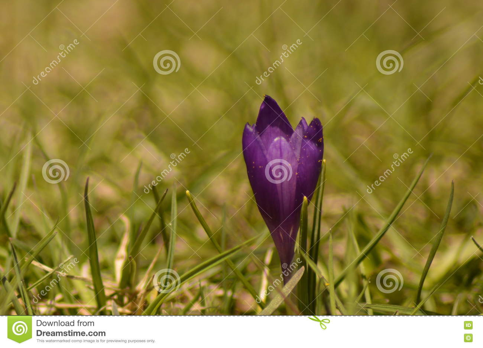 Un macrophotography de belle fleur isolée