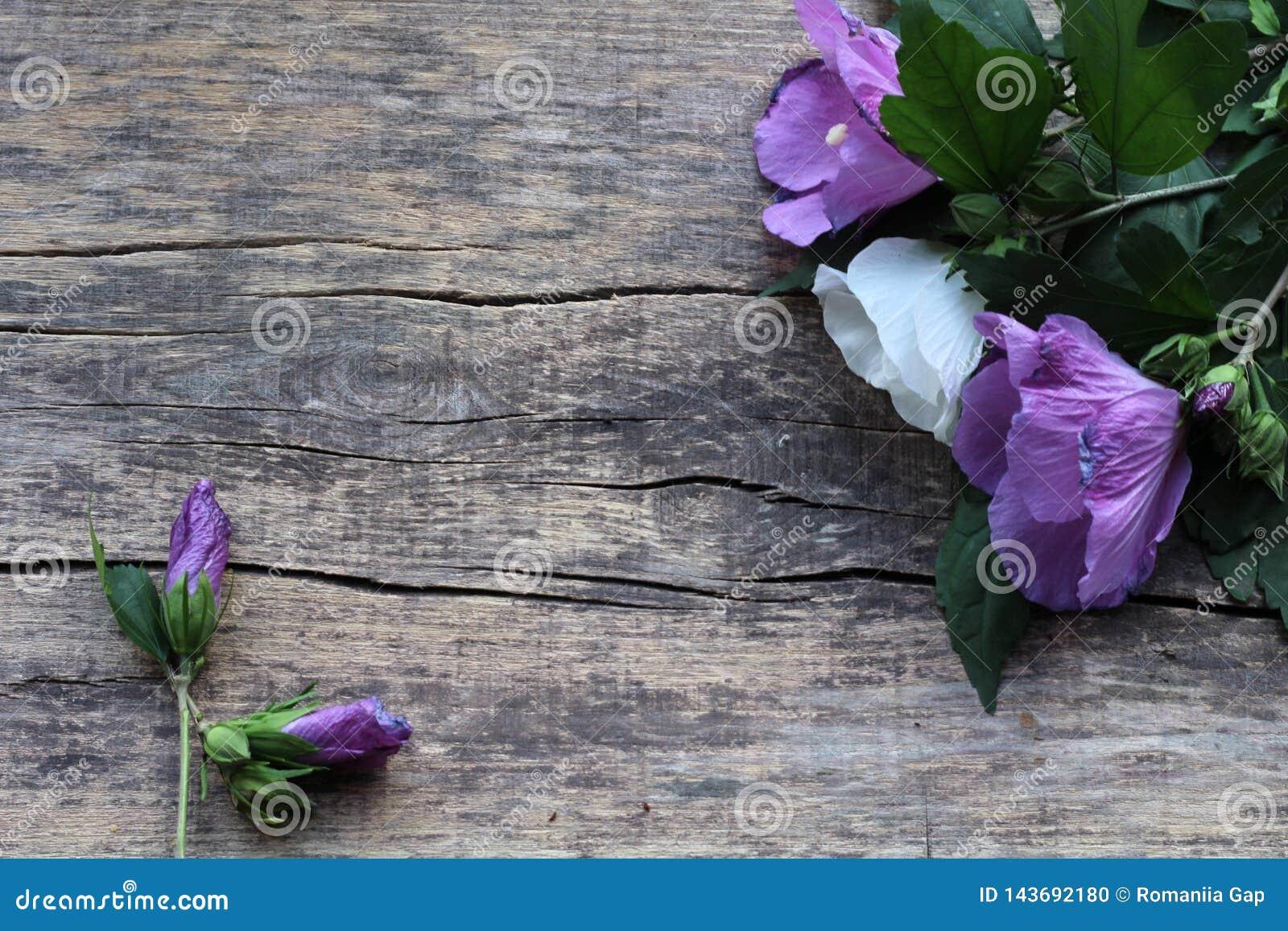 Un mazzo di due fiori porpora e di uno bianchi come pure due pegni sono su un fondo di legno