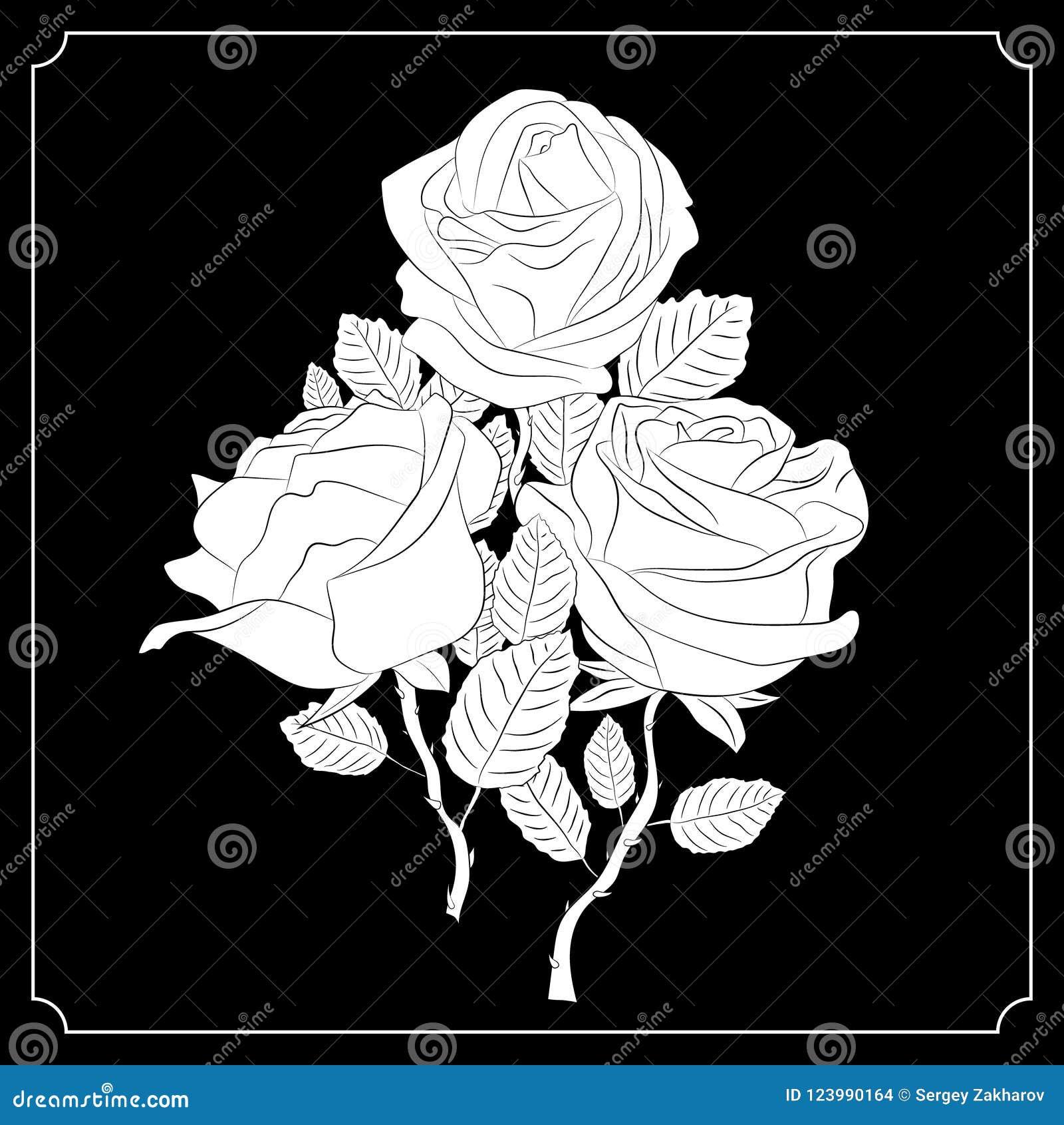 Un Mazzo Di Tre Rose Disegno In Bianco E Nero Calligraphy Tatuaggio