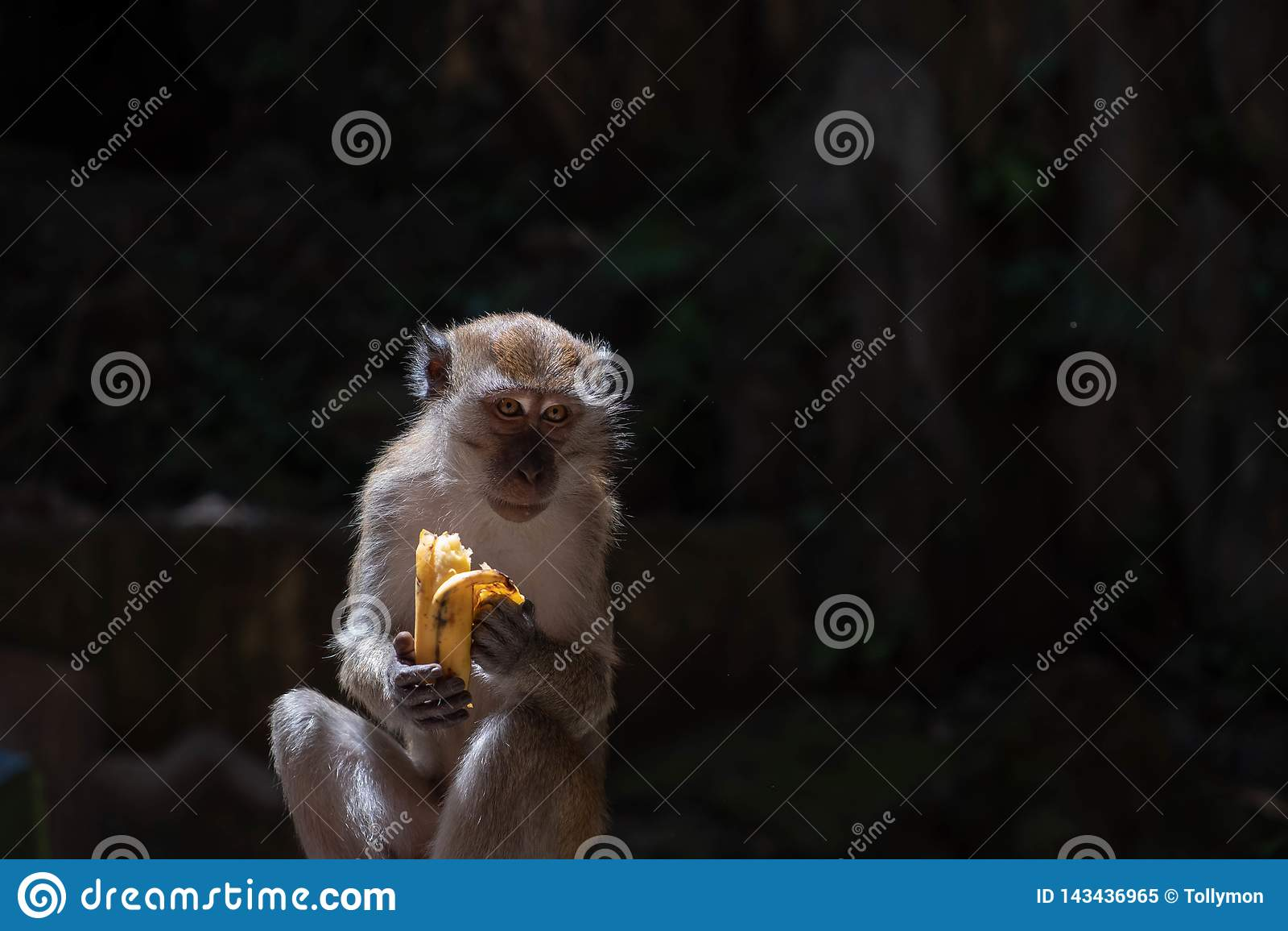 Un mono hambriento