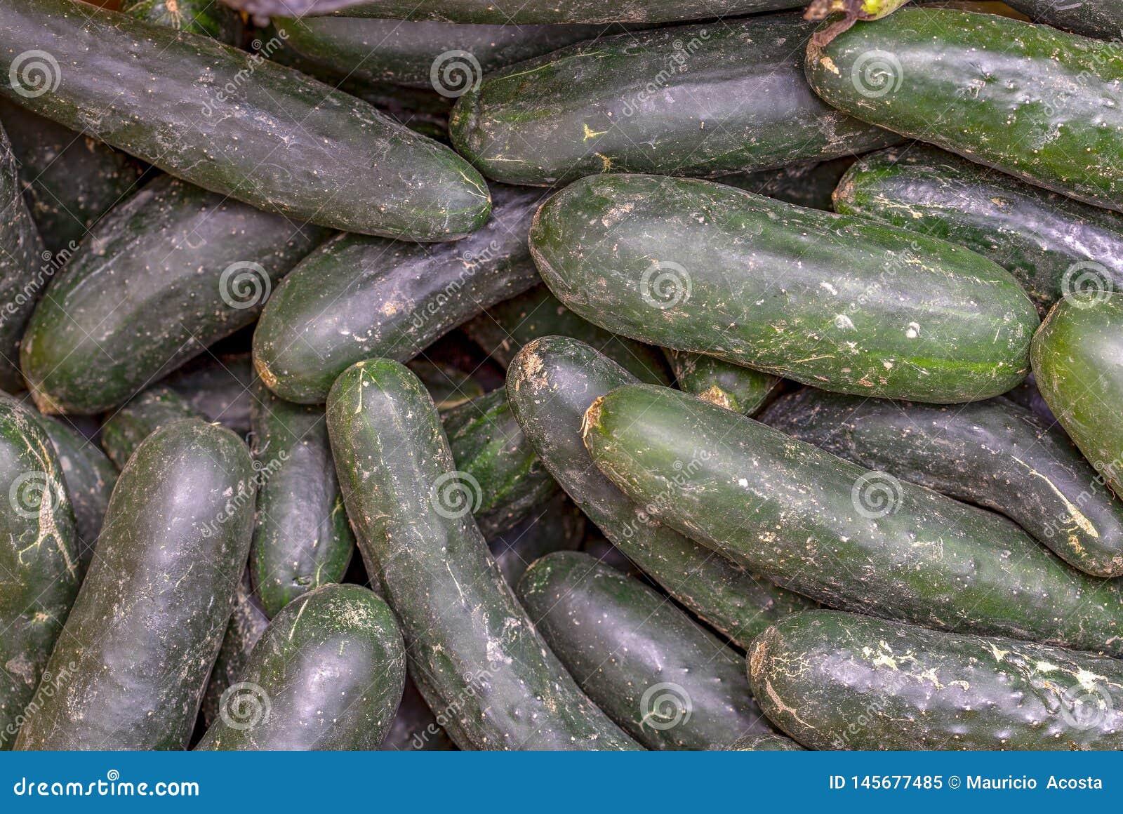 Un montón de pepinos verdes