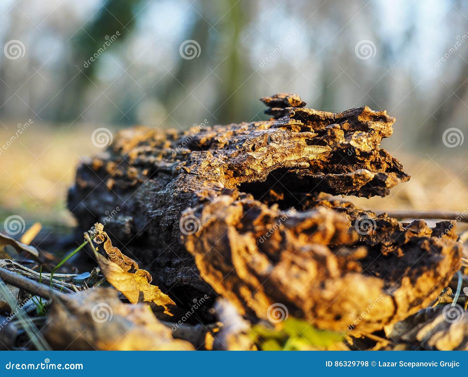 Un morceau de bois âgé