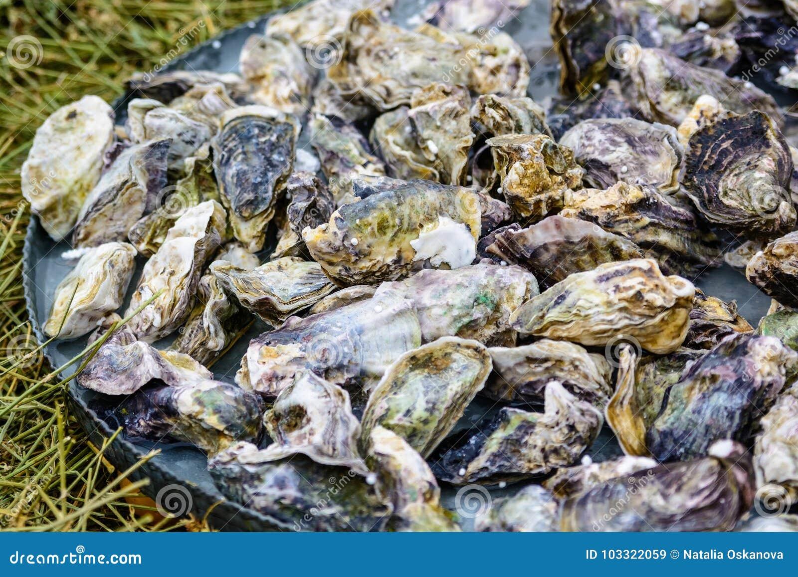 Un mucchio delle ostriche non aperte sul piatto