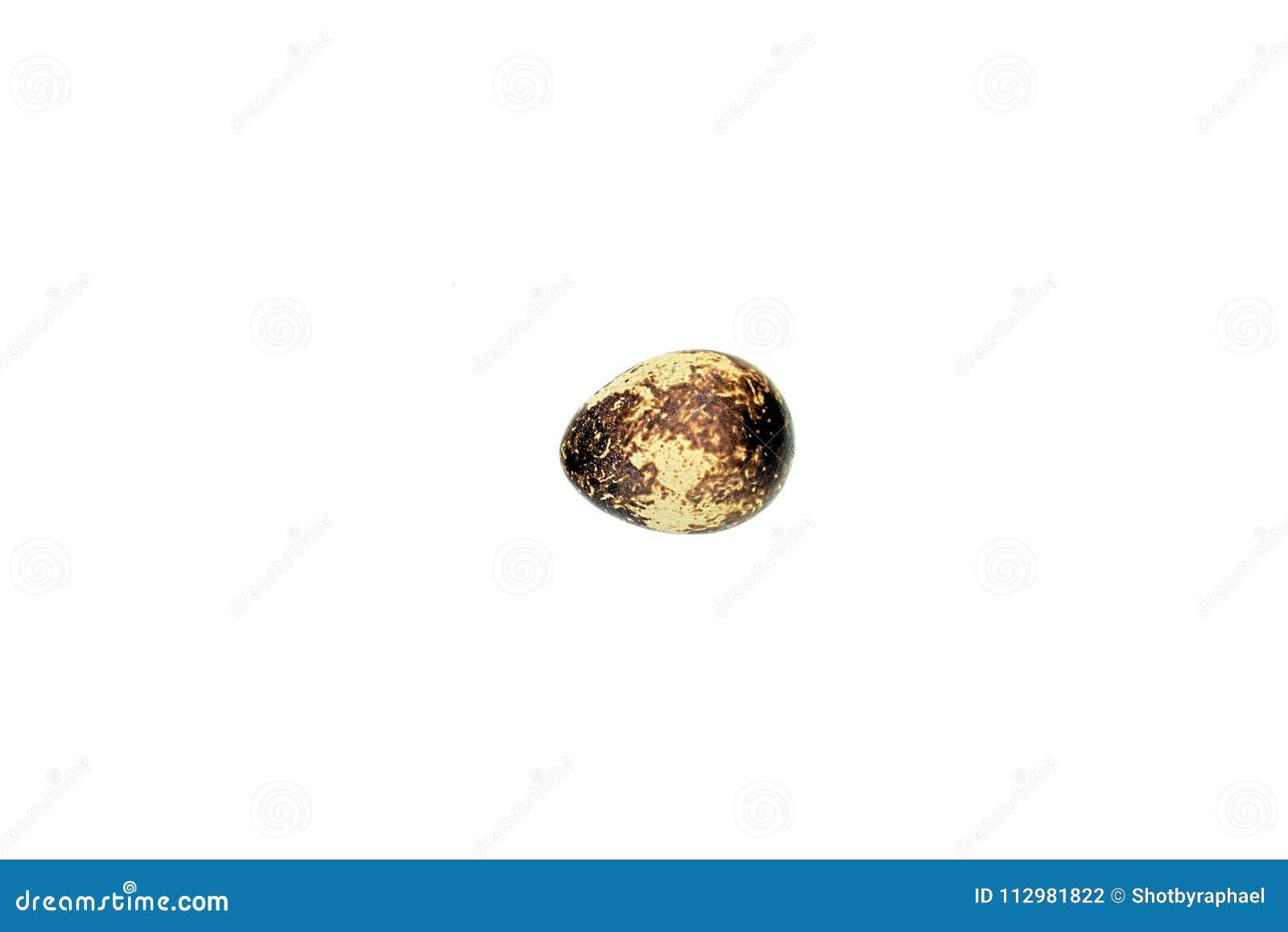 Un oeuf de caille simple sur un tout le fond blanc